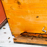 api ischia2