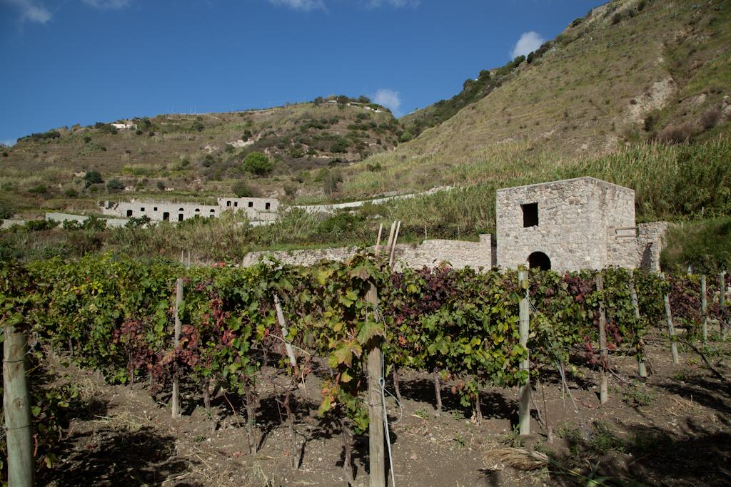 Azienda Agricola Ruffano snc